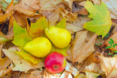 Pears med äpplet på leaves Royaltyfri Fotografi