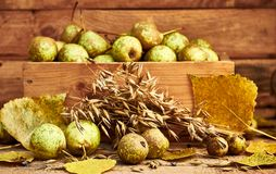 Pears, oats grain and fall leaves in front of wooden box with pears on wooden background. Still life from pears, oats grain, heads and fall leaves laying in stock images