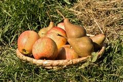 Pears och äpplen Royaltyfri Bild