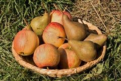 Pears och äpplen Fotografering för Bildbyråer