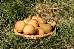 Pears och äpplen Royaltyfri Fotografi