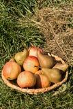 Pears och äpplen Arkivfoto