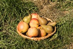 Pears och äpplen Royaltyfria Foton