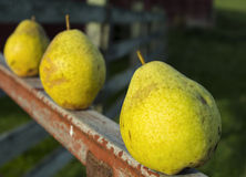 Pears outside Stock Photography