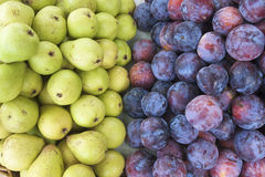 Pears and plums. Group of pears and plums in equal Royalty Free Stock Images