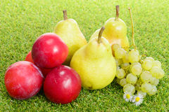 Pears, plums and grapes Stock Photography
