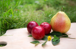 Pears and plums Stock Image