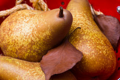 Pears on red colander Stock Image