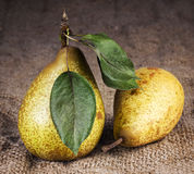 Pears still life country Stock Photography