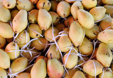Pears In Transportation Container. Closeup image of pears in transportation in transportation container Royalty Free Stock Images