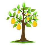 Pears in tree Royalty Free Stock Photography
