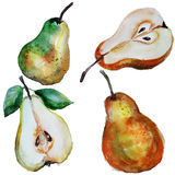 Pears watercolor Royalty Free Stock Photos