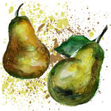 Pears watercolor Royalty Free Stock Images