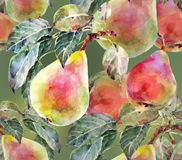 Pears ,  watercolor Stock Image