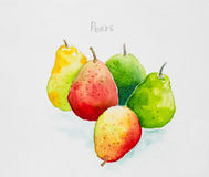Pears watercolor painted Royalty Free Stock Images