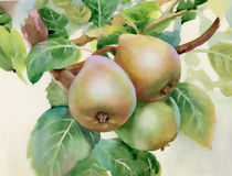 Pears. Watercolor, white, white background Stock Image