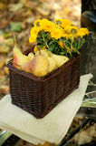 Pears and yellow chrysanthemums Royalty Free Stock Images