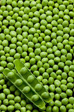 Peas. Still life of pea pod with peas Stock Images