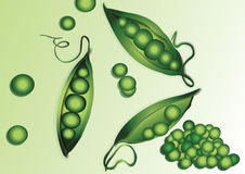 Peas. Fresh pea beans for cooking stock illustration
