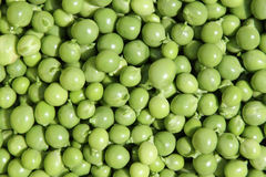 Peas. Freshly shelled, mixed sized green peas. healthy vegetables Stock Photo