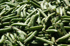 Peas Bio Stock Photography