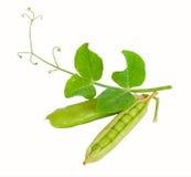Peas Stock Photos