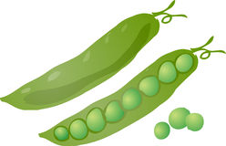 Peas. Sketch of peas in a pod Hand-drawn lineart look illustration Stock Photos