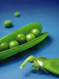 Peas 5. Studio shot of peas with pods royalty free stock photo