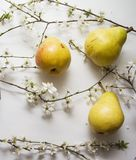 Peas in bloom closeup Royalty Free Stock Image