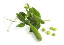 Peas branch Stock Image