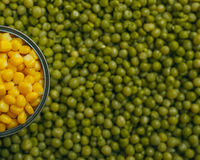 Peas corn background Stock Photography