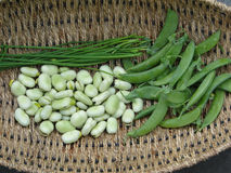 Peas, fava beans Stock Image