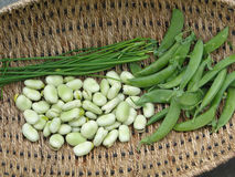 Peas, fava beans and chives Royalty Free Stock Photos