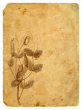 Peas - a flower and pod. Old postcard. Stock Images