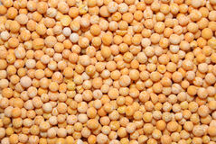 Peas grains Stock Images