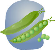 Peas illustration Stock Image