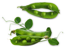 Peas_leaves_composition Stock Photos