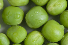 Peas macrp Stock Images