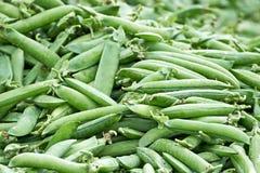 Peas (Pisum sativum) Stock Images