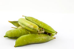 Peas Pisum sativum Royalty Free Stock Photography