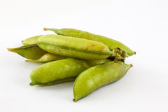 Peas Pisum sativum Royalty Free Stock Photo