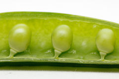 Peas in a pod royalty free stock image