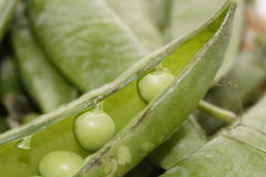 Peas in the pod Royalty Free Stock Images
