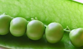 Peas in a Pod. Macro image of peas in a pea pod all in a row stock images