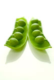 Peas in pod upright. Frash garden peas in pod on white tile stock images