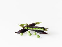 Peas in purple pod (kapucijners). Fresh green peas in purple pods. In the Netherlands these are called kapucijners Stock Images