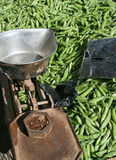 Peas and scales Stock Photography