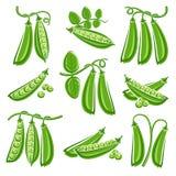 Peas set. Vector Stock Image