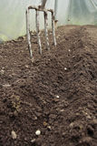 Peas Sowed In Greenhouse Stock Images