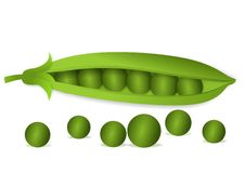 Peas. Vector illustration of green peas isolated on white background Royalty Free Stock Photos